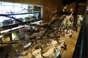 Kitakyushu_Museum_of_Natural_History___Human_History_-_Kitakyushu_-_Reviews_of_Kitakyushu_Museum_of_Natural_History___Human_History_-_TripAdvisor